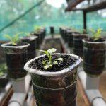 土の処分方法に困らないために|ごみに出せる培養土と土の代用品