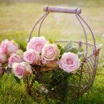 四季咲きのバラの育て方|肥料や水やり方法について