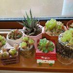 楽しい植え替えざんまいpart3 | 多肉植物&観葉植物