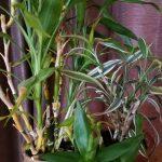 楽しい植え替えざんまいpart2 | 多肉植物&観葉植物