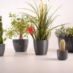 楽しい植え替えざんまいpart4 | 多肉植物&観葉植物