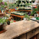 バラの寒肥にぴったりの肥料を考える【その2】有機堆肥