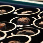 リトープスとは|多肉植物「生きた宝石」リトープス