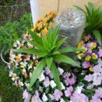 ビオラと百合の球根の寄せ植え|春まで楽しむ寄せ植え