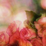 香りが強いバラの品種・種類は?|バラの香りの7つの分類と表現