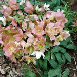 春待つ庭に波乱の予感|春先の水管理は難しい
