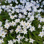 今年のバラも開花は早そう|うららかな春の庭