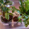 植物のお留守番|自動給水器なしでお留守番させるワザ