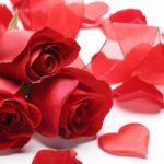 バラの咲き方・花形ガイド1|剣弁高芯咲き・半剣弁平咲き