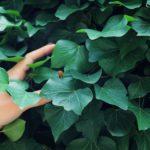 人間ベープの私がすすめる【蚊対策】|森林香とハッカ油
