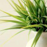 夏が得意?夏の観葉植物の管理と育て方のコツ