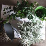 ハイドロボールと赤玉土|室内栽培の観葉植物の土を考える