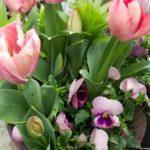 【秋にスタンバイ!】春の豪華な寄せ植え|球根とビオラの寄せ植え