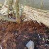 バラに最適な有機堆肥は?|有機堆肥を考える