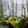 ベランダ簡易温室の植物の越冬|良い影響も悪い影響も
