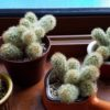 室内栽培の観葉植物の水管理を考え直そう