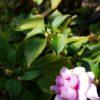 早春のベランダの風景|バラが咲いていなくても