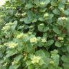 主なしでも花は咲く|長野の自宅の庭の花たち