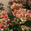 夏の終わりの庭のお手入れ|9月に向かう庭