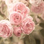 母に香りのバラを捧げて|認知症の進行を防ぐために