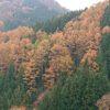 紅葉を見に行こう【2019】信州~富士山周辺域は紅葉が見ごろ