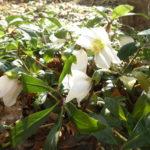 【2020】大寒間近の長野の庭|雪はなくてもやっぱり寒い?